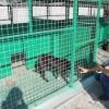 Притулок для тварин у Павлограді