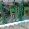 Відловлені безпритульні собаки тепер живуть у карантинній зоні притулку для тварин