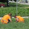 Літнє працевлаштування школярів