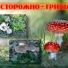 Небезпека збору дикорослих грибів