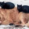 Безпритульні тварини: Хто винен та Що робити? Запрошуємо до діалогу