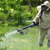 Проведення дезінсекційних заходів на території  зелених зон міста Павлоград